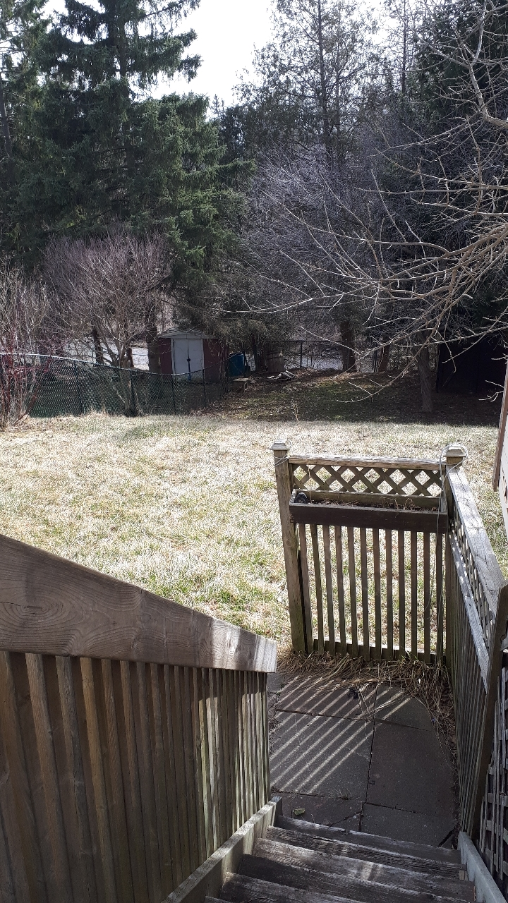 View of the rear yard